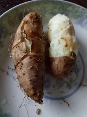 广东湛江吴川市毛薯 2-5两