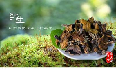 河北沧州蘑菇 野生菌松蘑干货批发,厂家直销野生松蘑