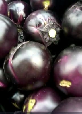 山东聊城紫光圆茄 5两以上