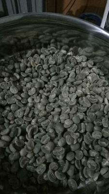 云南保山隆阳区保山小粒咖啡生豆