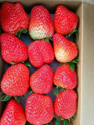 四川成都双流冬草莓 50克以上