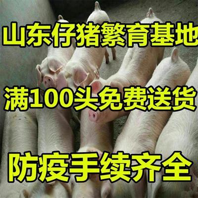 这是一张关于长白仔猪的产品图片