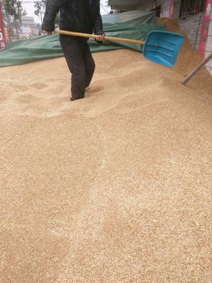 河南鹤壁混合小麦