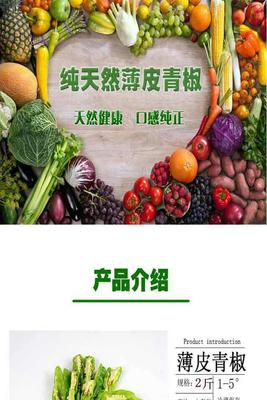 这是一张关于薄皮椒 10~15cm 中辣的产品图片
