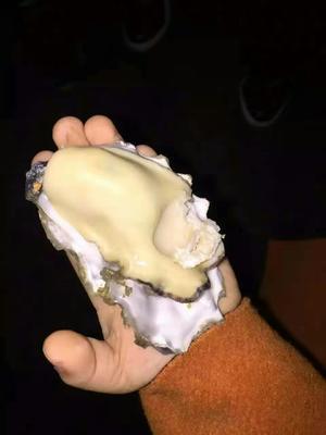 山东日照牡蛎 人工殖养 5-10只/公斤