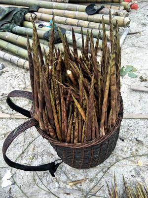 广西柳州方竹笋 25~30cm 鲜笋