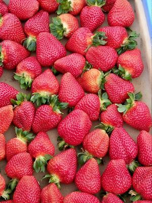 云南曲靖双流冬草莓 20克以上