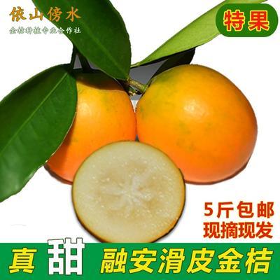 广西柳州滑皮金桔 3-4cm 1两以下 特果一箱5斤