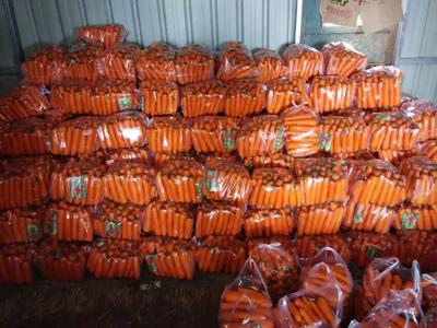 河南开封三红胡萝卜 10~15cm 3两以上 3~4cm