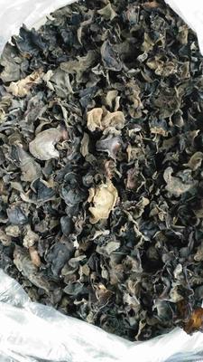 黑龙江省鸡西市鸡冠区大叶木耳菜 紫色
