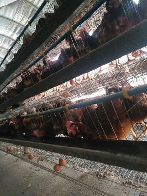这是一张关于红皮鸡蛋 食用 散装的产品图片