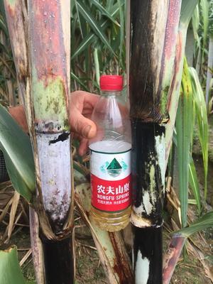 这是一张关于青皮甘蔗 5 - 6cm 2.5 - 3m 甘蔗青皮甘蔗的产品图片
