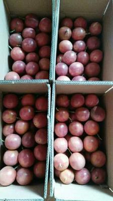 这是一张关于紫香一号百香果 90 - 100克的产品图片