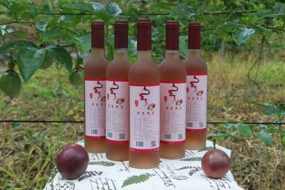 广西百色果酒 15-20度 5年以上