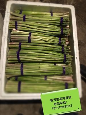 浙江嘉兴绿芦笋 28cm以上 7mm以上