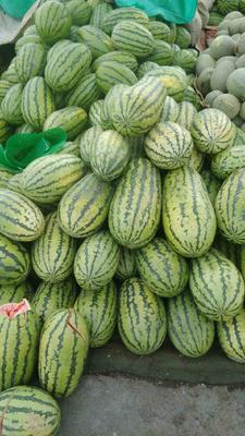 新疆乌鲁木齐甜王西瓜 有籽 1茬 10成熟 8斤打底