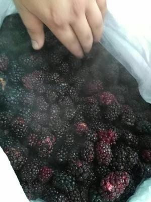 江苏连云港赣榆区美国黑莓