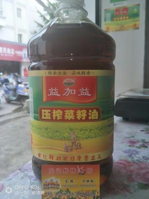 安徽黄山原香菜油 5L/桶