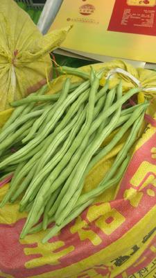 山东聊城泰国豆 1cm以上 20cm以上
