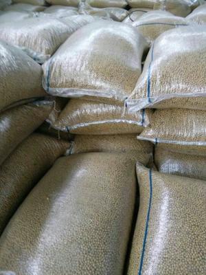 山东济宁黄黄豆 生大豆 1等品 过筛选,过比重,过带选的精品优质大豆
