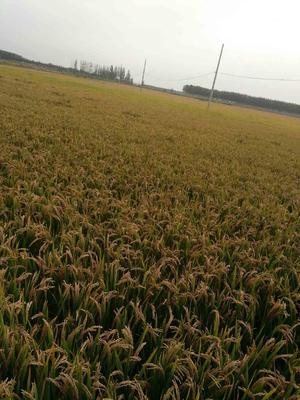 河北唐山稻草