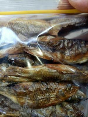 广西柳州淡水石斑鱼苗 野生 0.5公斤以下