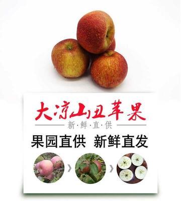 四川凉山丑苹果 膜袋 片红 60mm以上