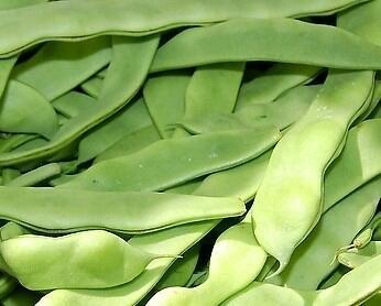 云南楚雄元谋县绿扁豆 2cm以上 20cm以上