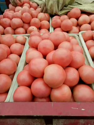 山东聊城粉钻西红柿 不打冷 硬粉 通货
