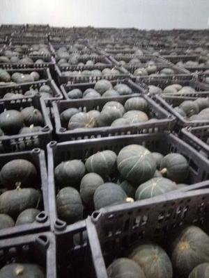 山东省潍坊市昌乐县贝贝南瓜 1~2斤 扁圆形