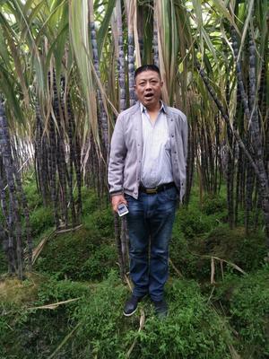 广西玉林黑皮甘蔗 6 - 8cm 2.5 - 3m