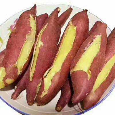 陕西西安板栗薯 红皮 4两以上