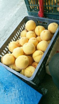 陕西咸阳黄金冠黄桃 70mm以上 4两以上