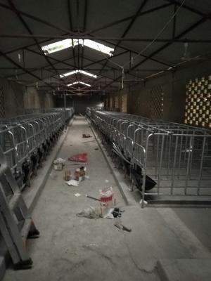 四川乐山母猪产床 保育床,限位栏
