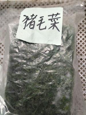 河北邯郸青苋菜 10-15cm 鲜绿