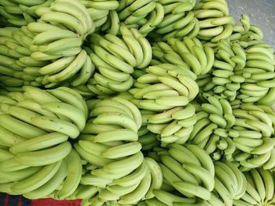 广西南宁广西蕉 40 - 50斤 七成熟