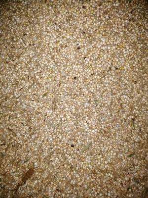 贵州黔西兴仁县红豆薏仁米营养代餐粉 带壳薏仁米求购(大概有一千多斤)
