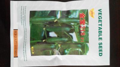 山东潍坊寿光市黄瓜种苗