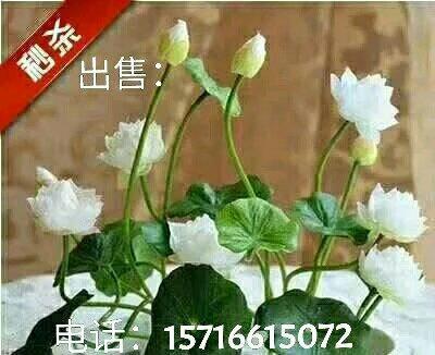河南省南阳市淅川县经营花卉盆景