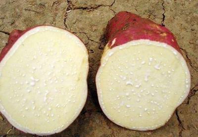 这是一张关于红薯 混装统货 红皮的产品图片