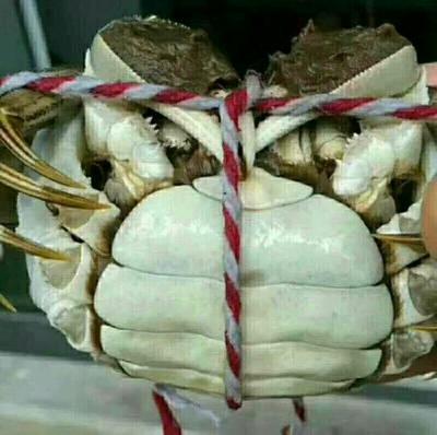 山东济宁洪泽湖螃蟹 2.0-2.5两 母蟹