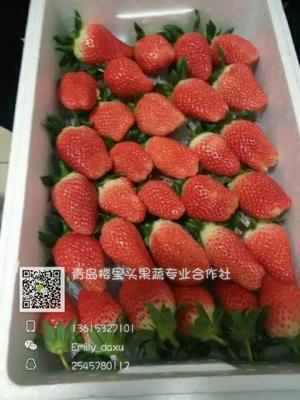 山东青岛甜宝草莓 30克以上