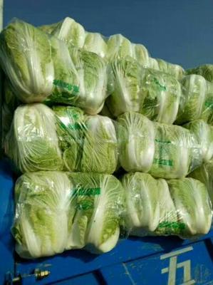 河南商丘夏邑大白菜 6~10斤 净菜