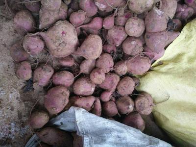 云南临沧紫罗兰紫薯 3两以上