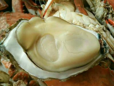 山东威海威海牡蛎 人工殖养 3-5只/公斤