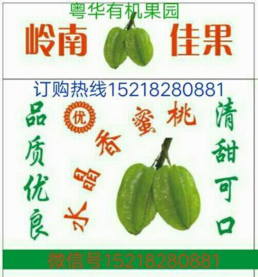 广东茂名化州市香蜜杨桃 3 - 4两