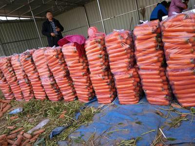 河南开封三红胡萝卜 15cm以上 3两以上 3~4cm