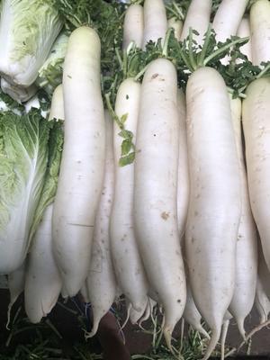 这是一张关于韩国白萝卜 4斤以上的产品图片