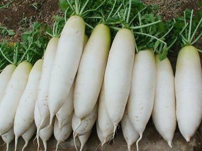 这是一张关于白萝卜 1~1.5斤的产品图片