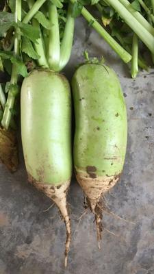 陕西渭南青头萝卜 1~1.5斤